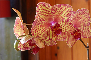 Orchid flower in San Sebastian del Oeste. Photo by Harvest Estudio