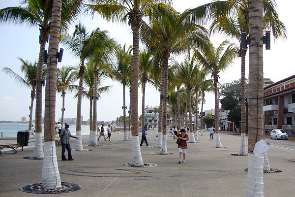 Walking among the palm trees on the new malecon ● Photo by Harvest Estudio